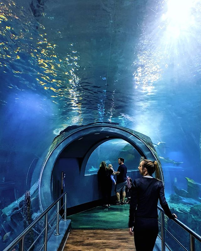 Underground aquarium? Yes please.. #sealife #visitmelbourne #seeaustralia