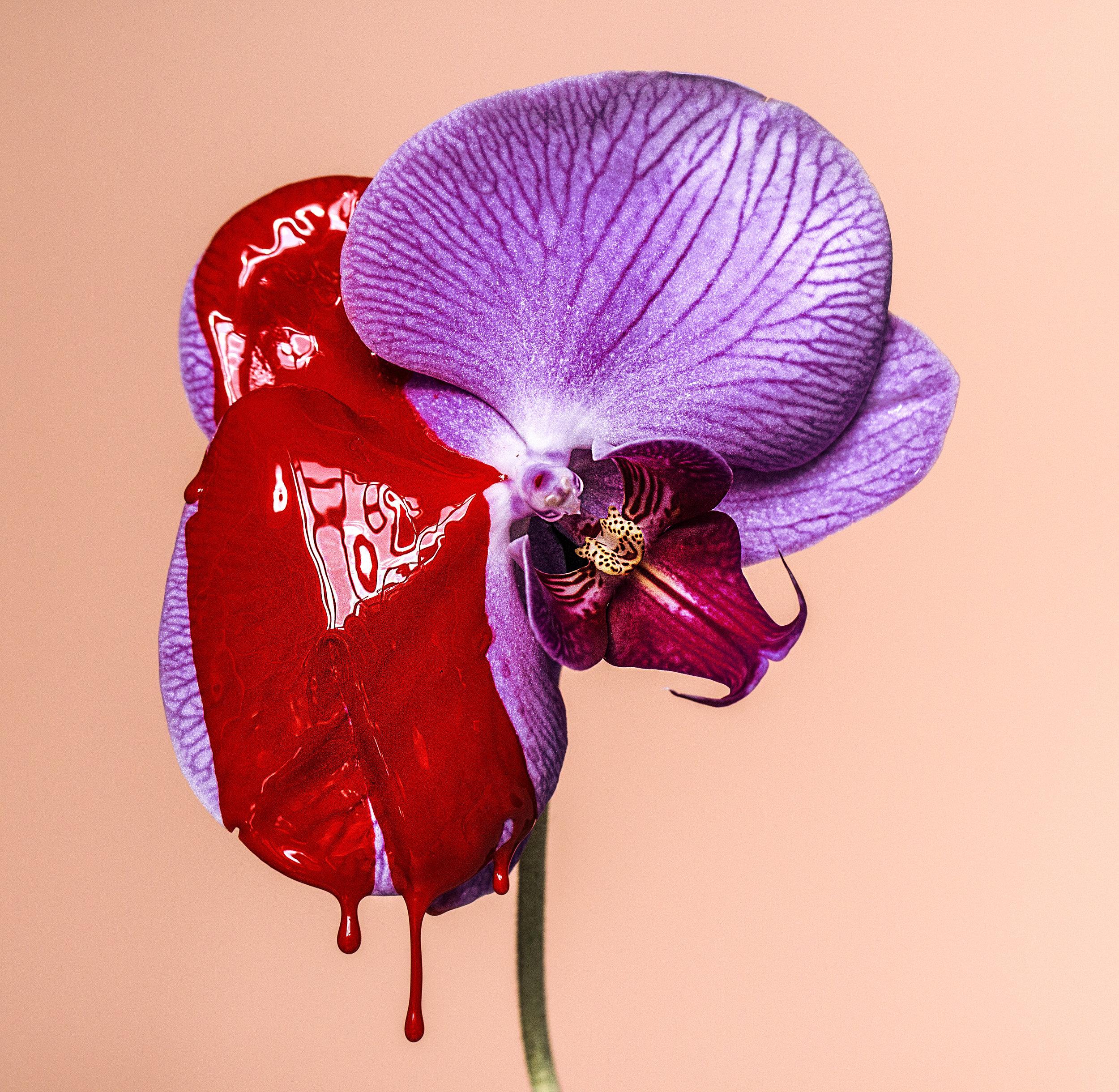 Heat-Suzanne.Saroff.Flower.Series.jpg