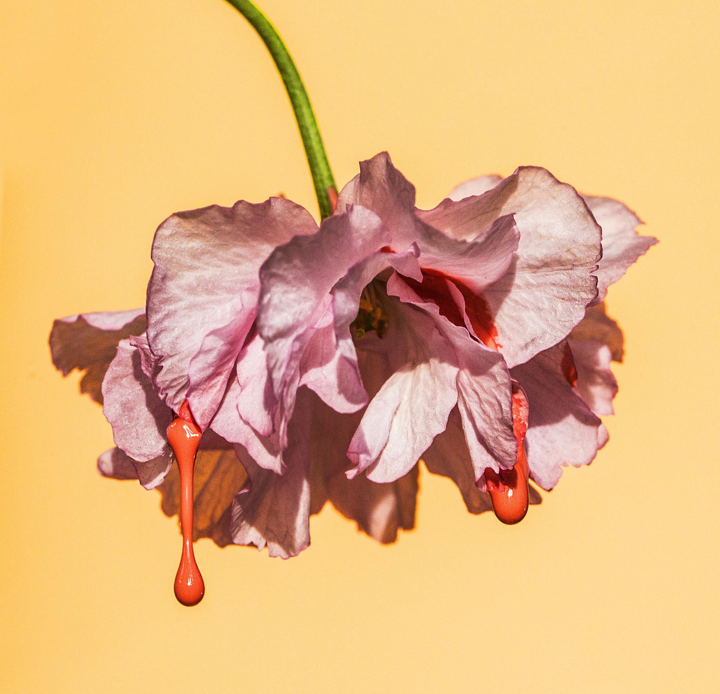 Warmth-Suzanne.Saroff.Flower.Series.jpg