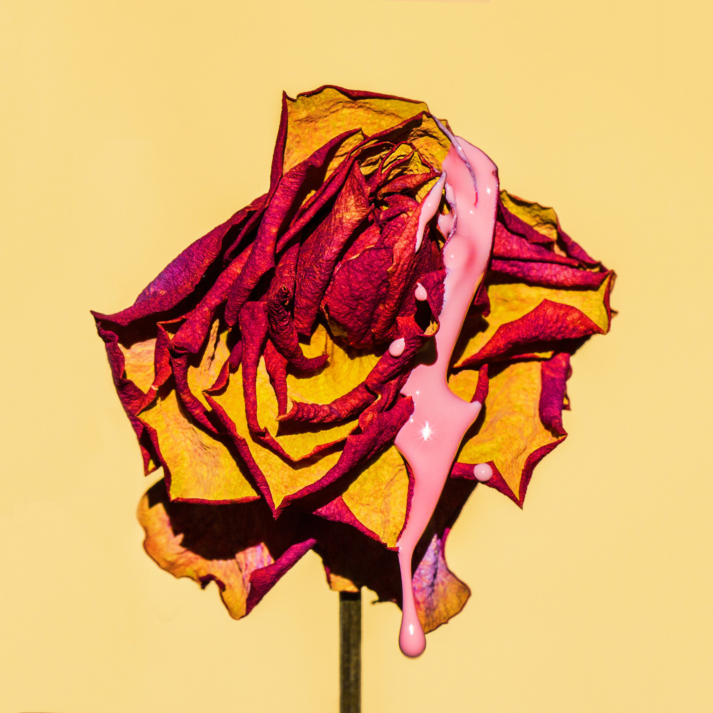 Fresh.Suzanne.Saroff.Flower.Series copy.jpg