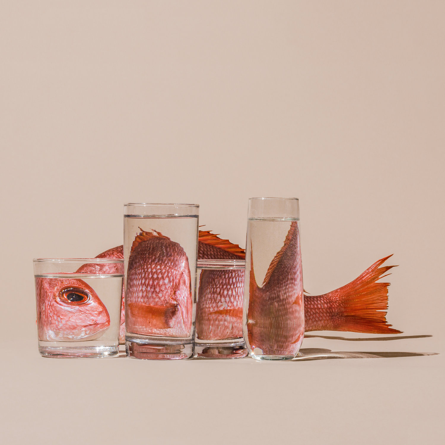 An art photo. The background is neutral and there is a fish with glasses of water placed in front of it to distort our view of the fish.