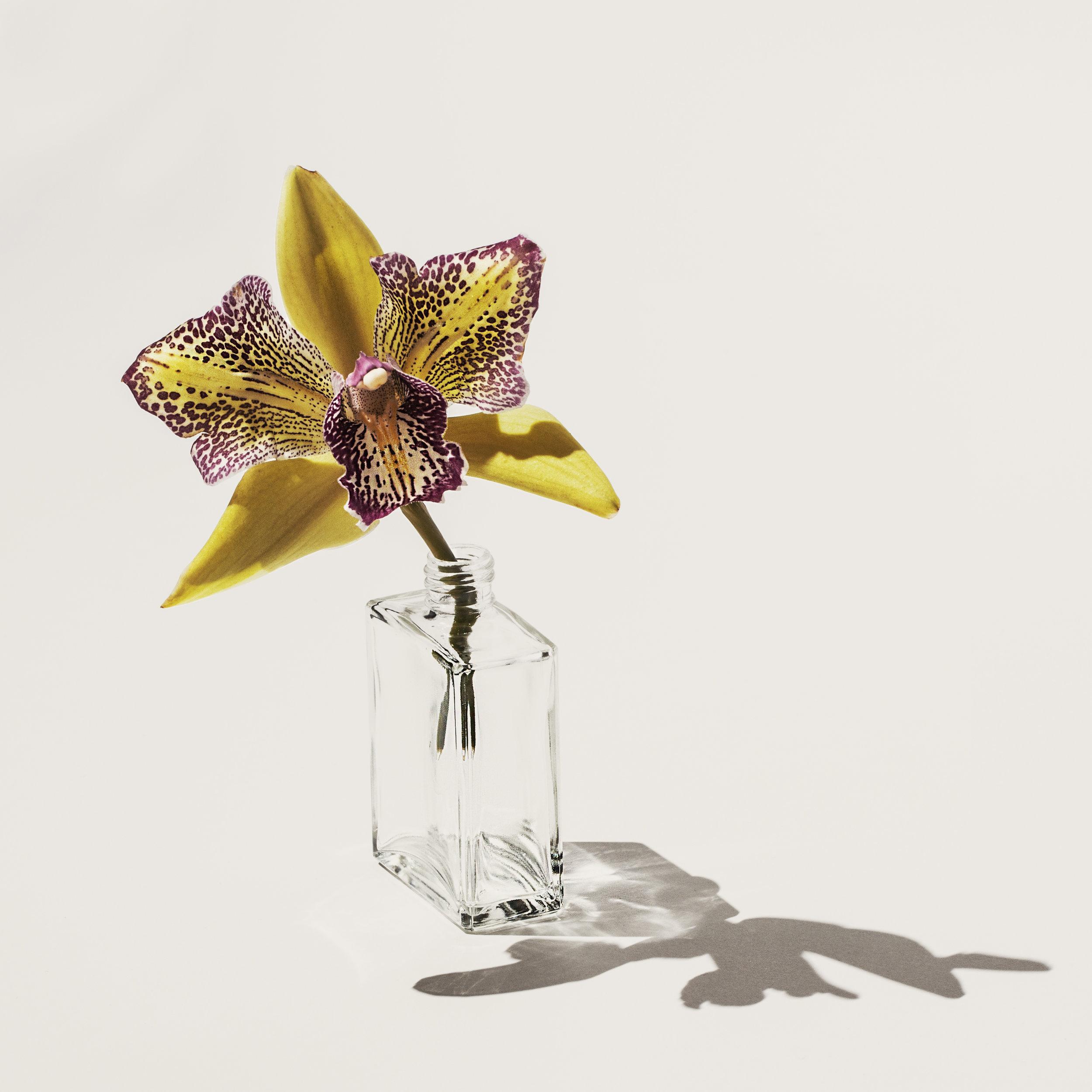 Orchid.SuzanneSaroff.jpg