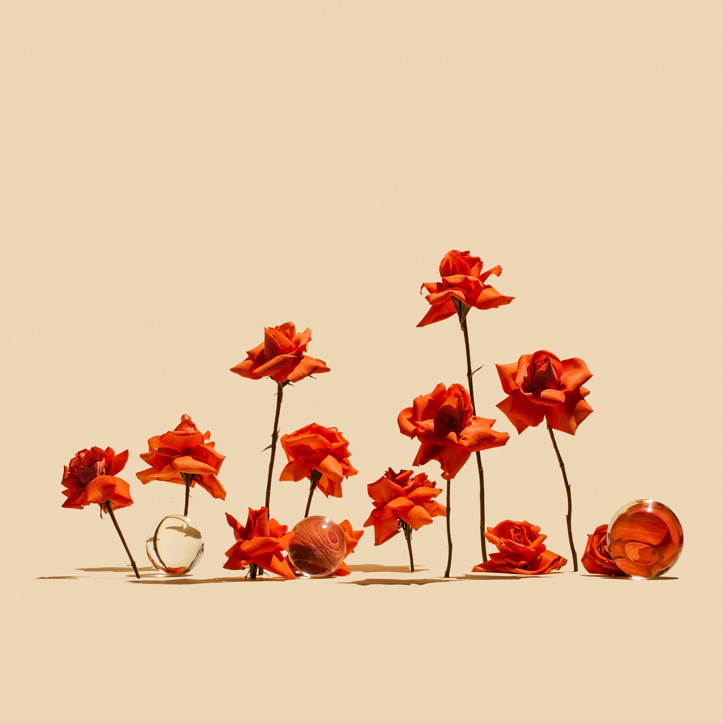 September Roses.jpg