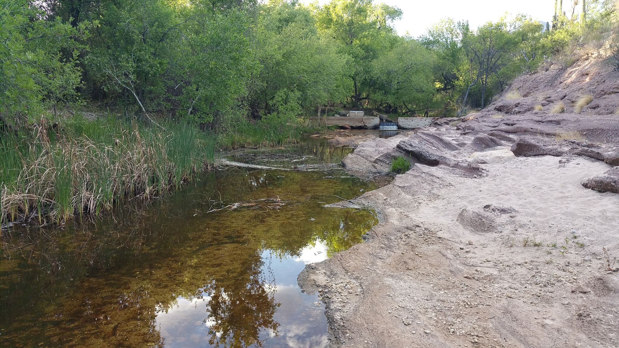 View of Lower Sabino Creek