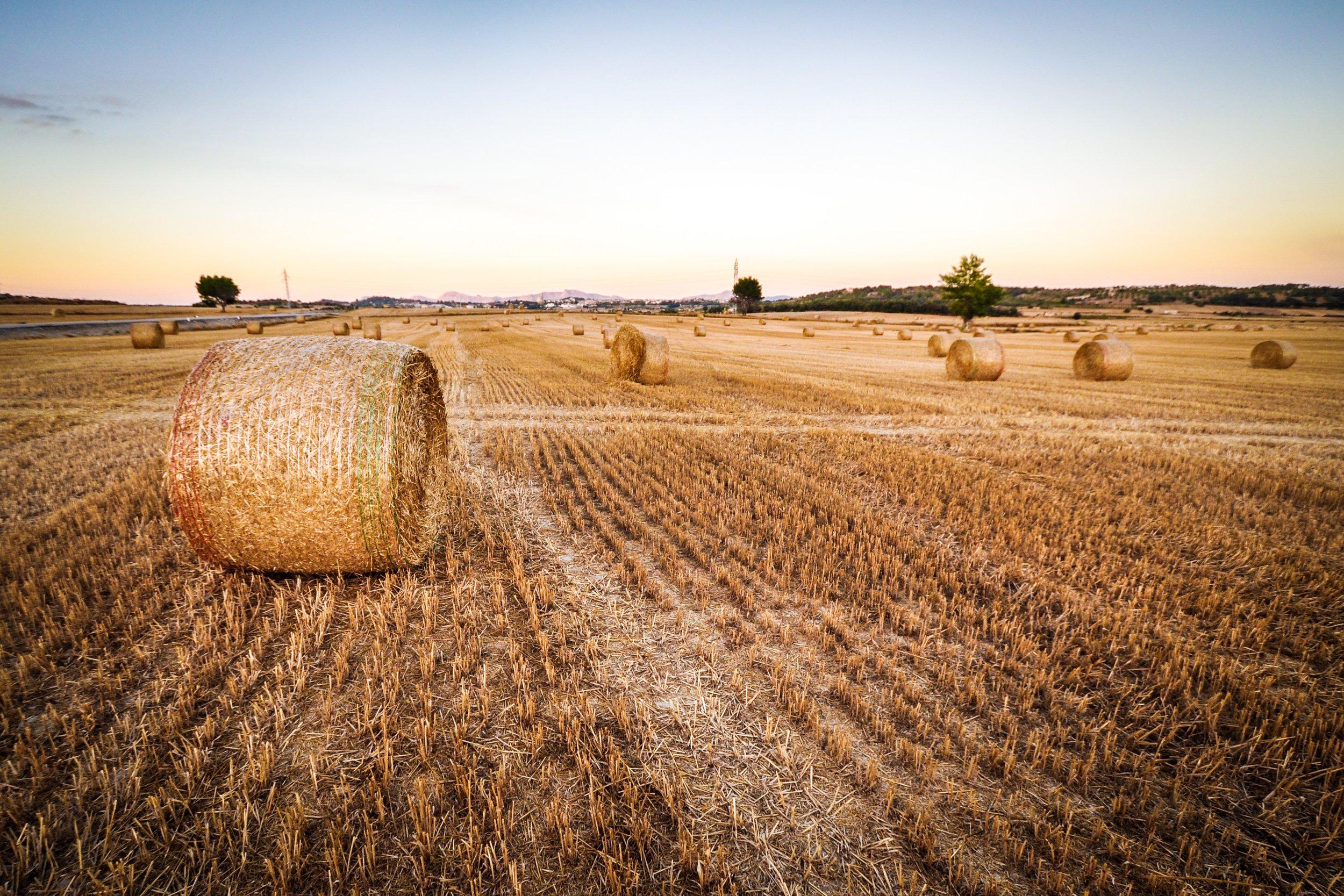 agriculture-1851510.jpg