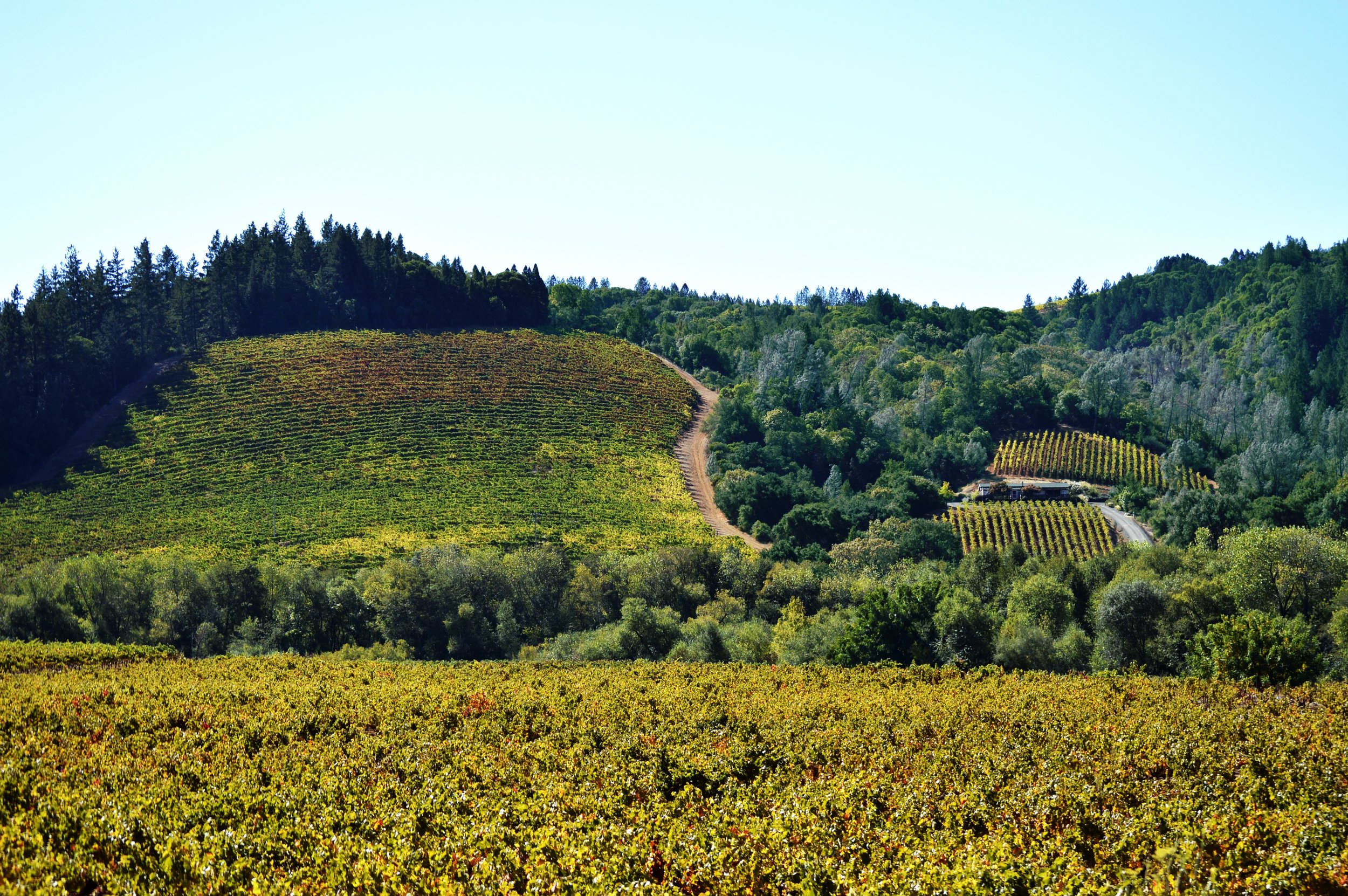Vineyard-WorkingLands_SonomaCounty-CA.jpg