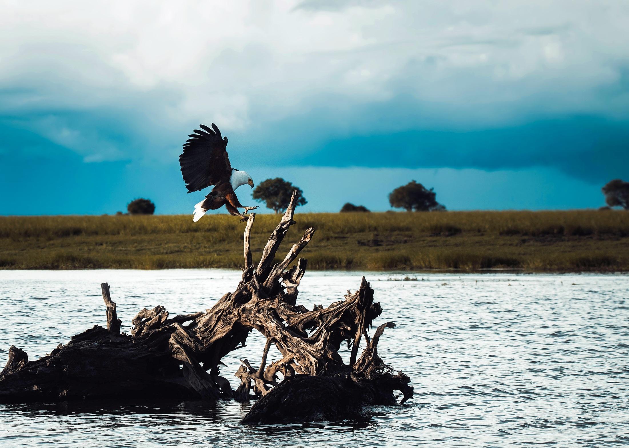 bald-eagle-1970606.jpg