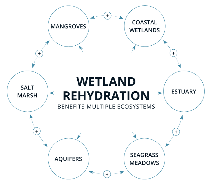 Wetland Reydration  Click to Enlarge