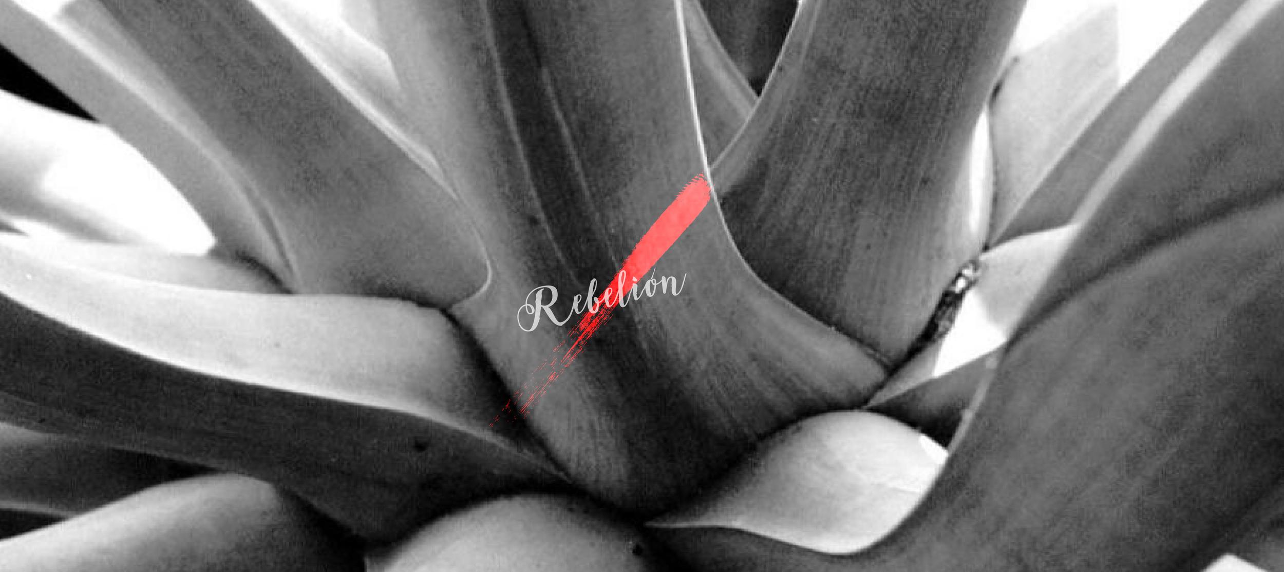 BEHAVE_CASOweb_REBELIÓN+2-05.png