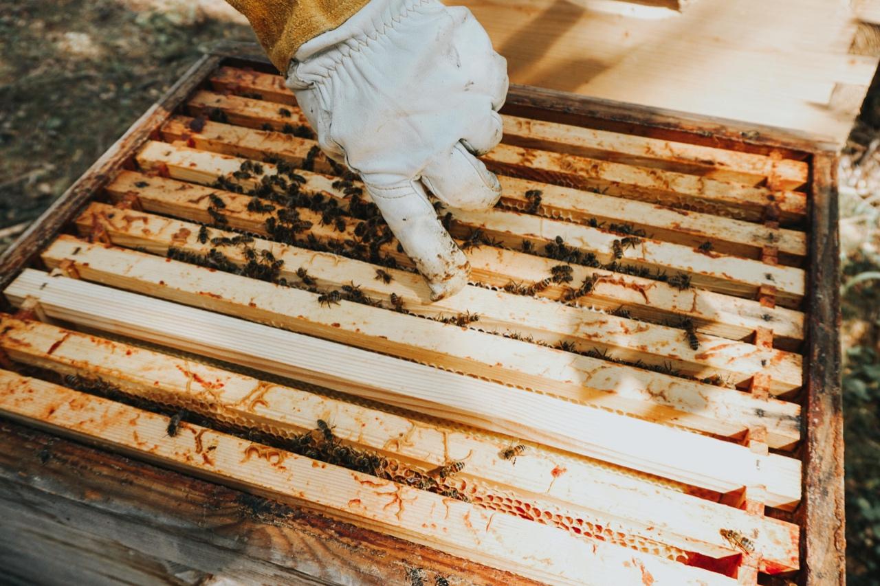 Nordic Honey_mahemesi_mahemesindus_mahemesinik_metsamesi_mesitarud_mesilased