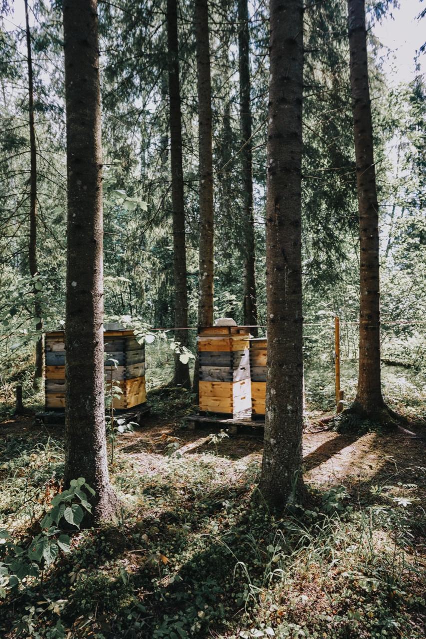 Nordic Honey_mahemesi_mahemesindus_mahemesinik_metsamesi_mesitarud