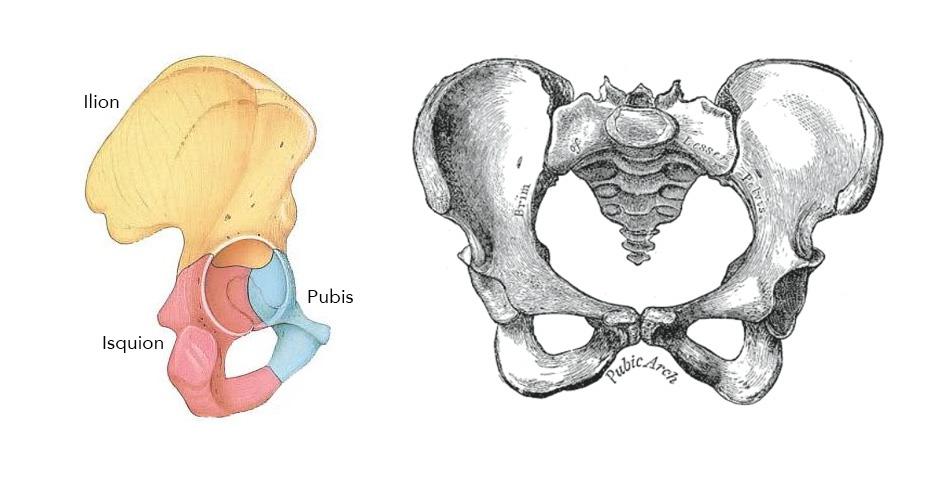 Los huesos de la parte inferior de la pelvis son los que más sufren al ir en bicicleta