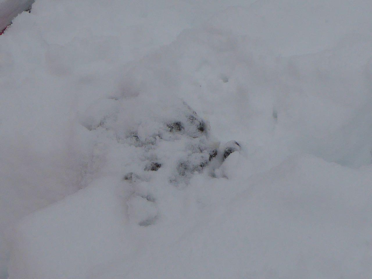 Frøy samler elg-bæsj til herbariet