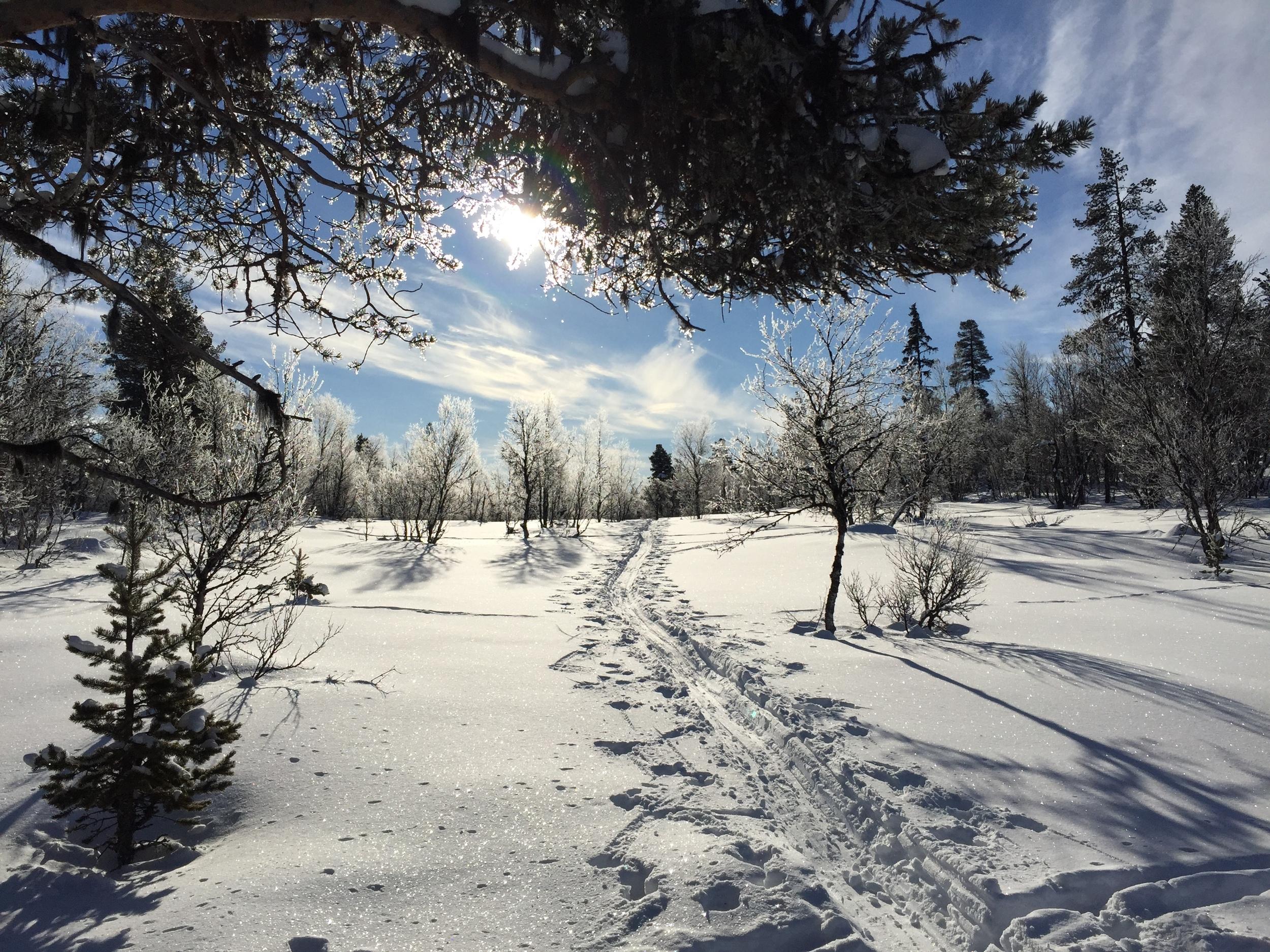 Fantastisk vintermorgen i lavvoen med Liv