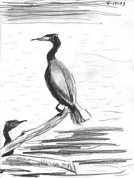04-19-13-cormorants.jpg