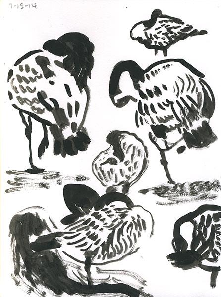 07-15-14-geese01.jpg