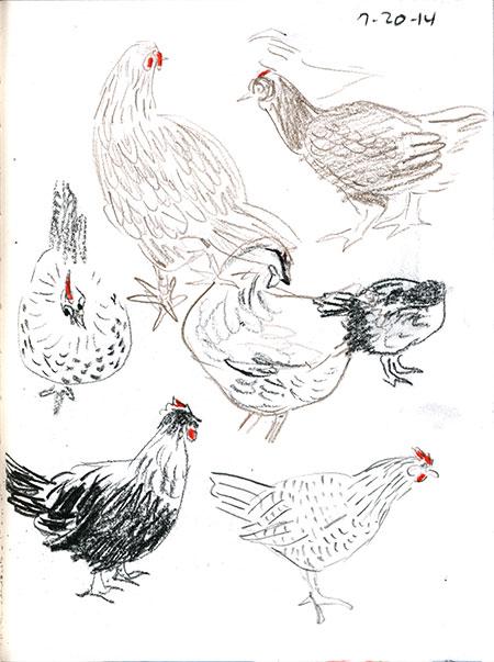 07-20-14-chickens.jpg