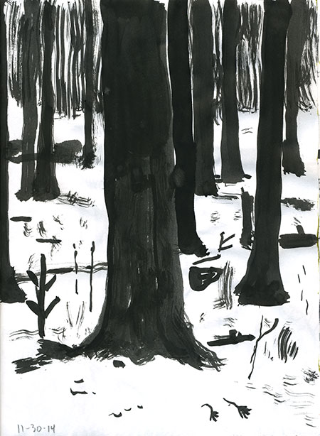11-30-14-forest.jpg