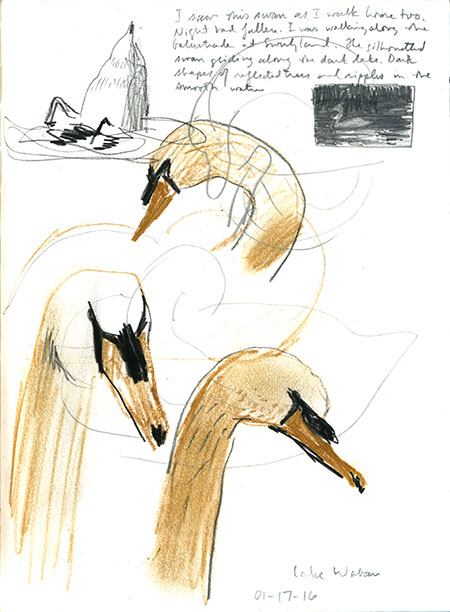 01-17-16-swan.jpg