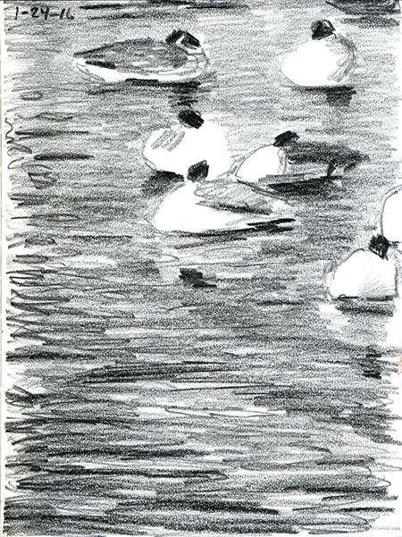 01-24-16-geese.jpg