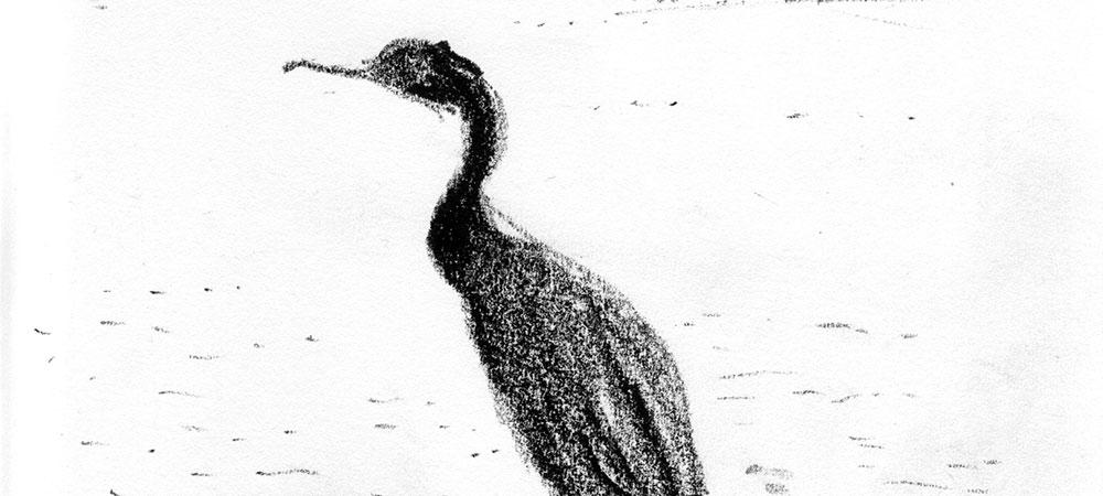 05-26-12-cormorant-cropped.jpg