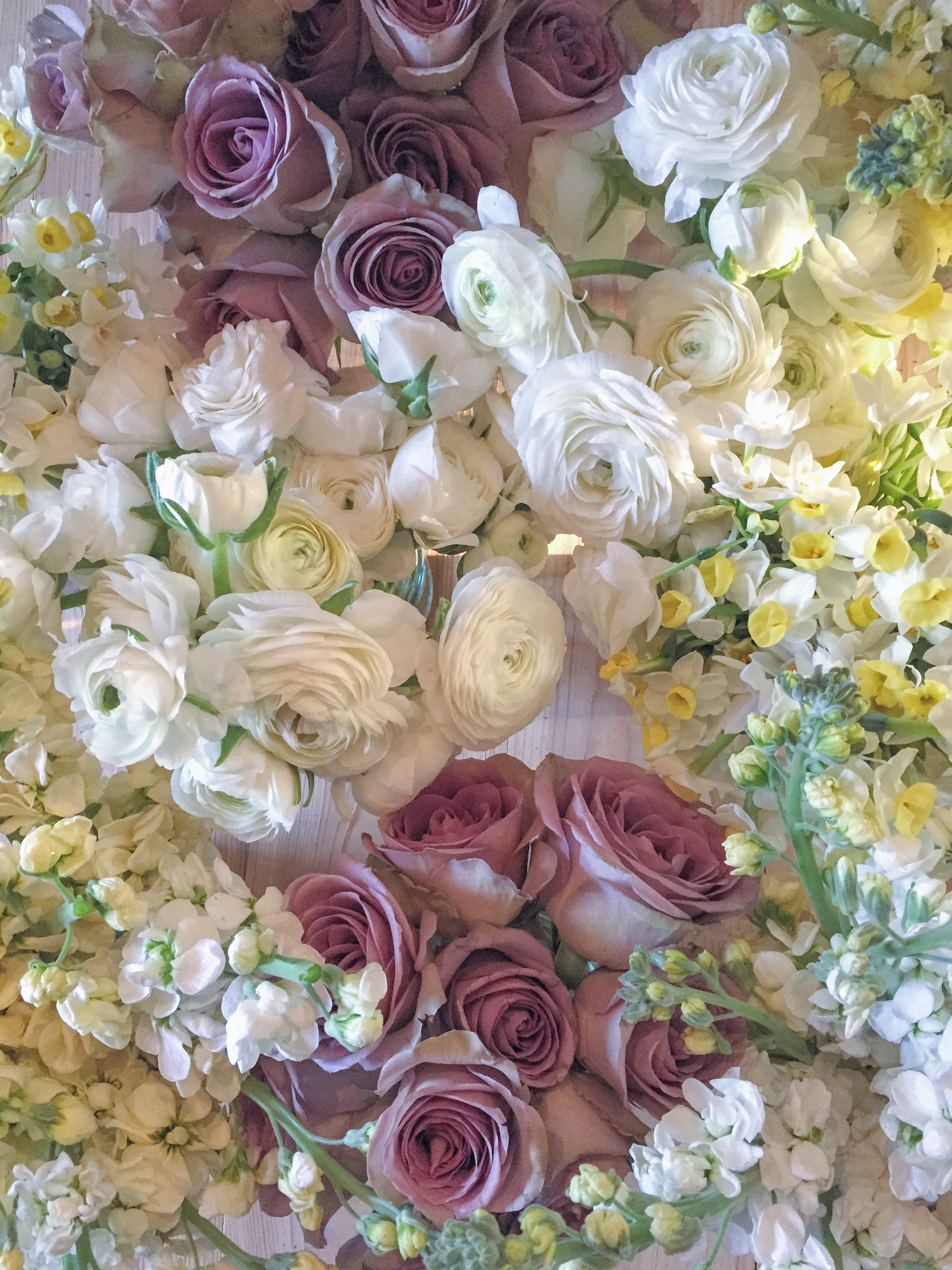 stock, roses, narcissi and ranunculus flatlay by Jennifer Pinder
