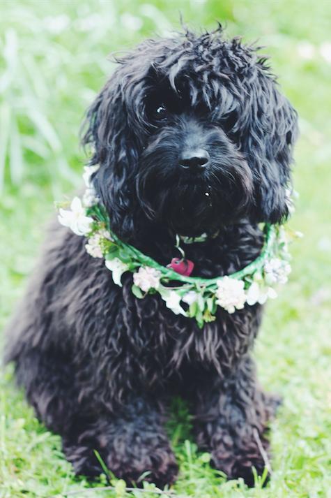 Matilda models her British grown flower collar