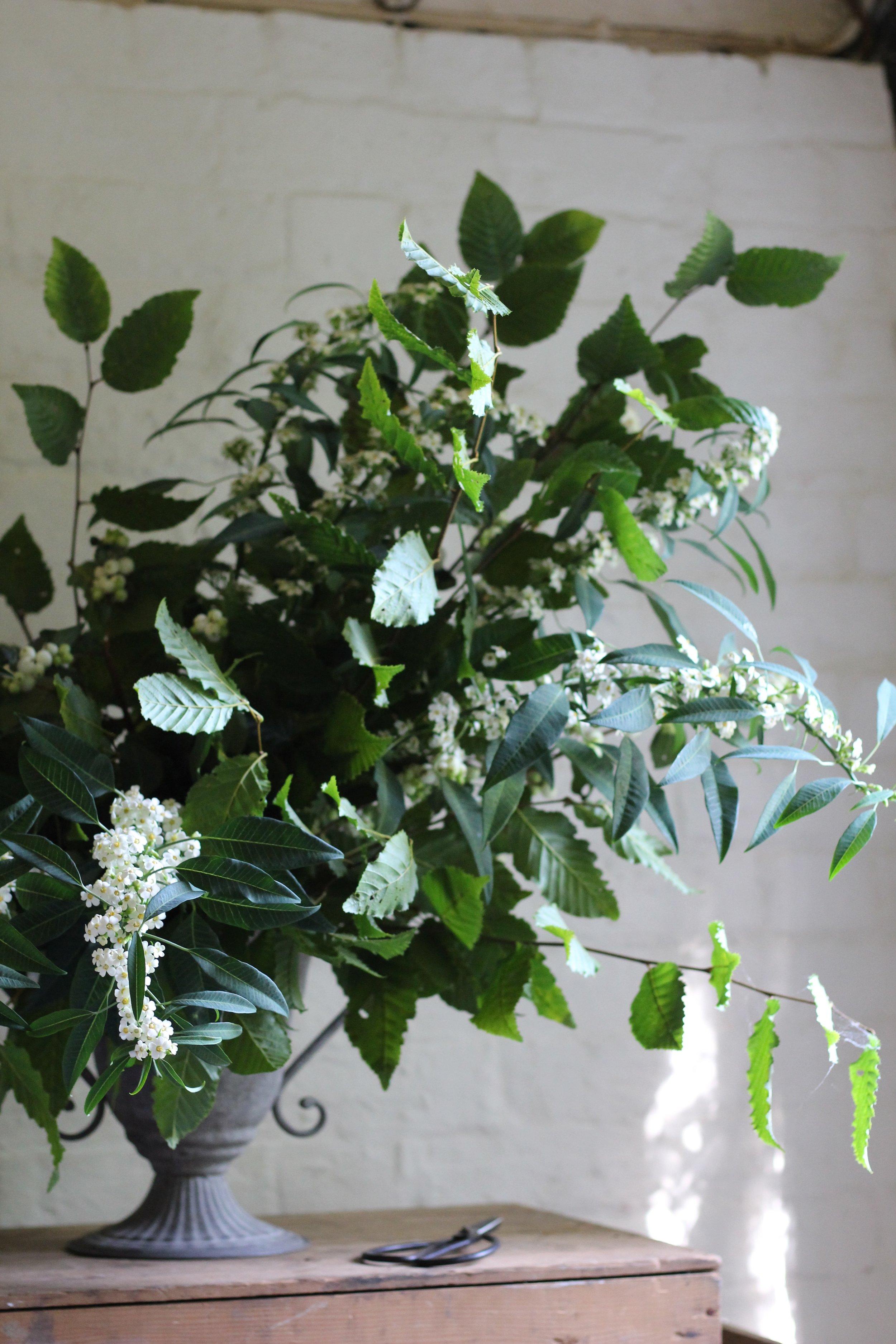 Jennifer Pinder Kent London florist flowers does a botanical themed green and white wedding at Jamies italain restaurant in London threadneedle street