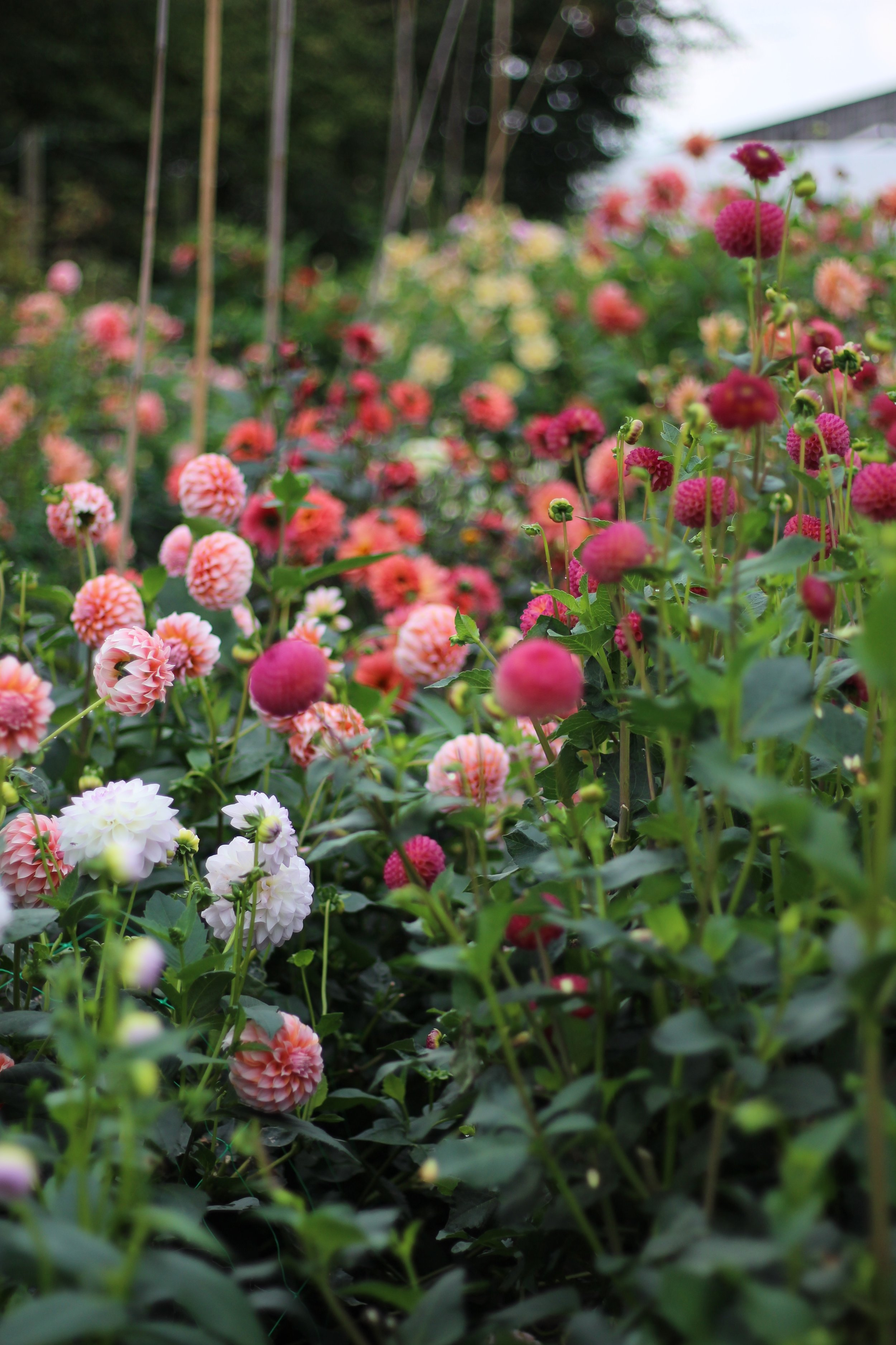 Jennifer Pinder Kent florist flower photography day