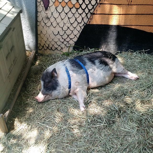 Our pal Franklin (at Crest Hardware & Urban Garden Center)