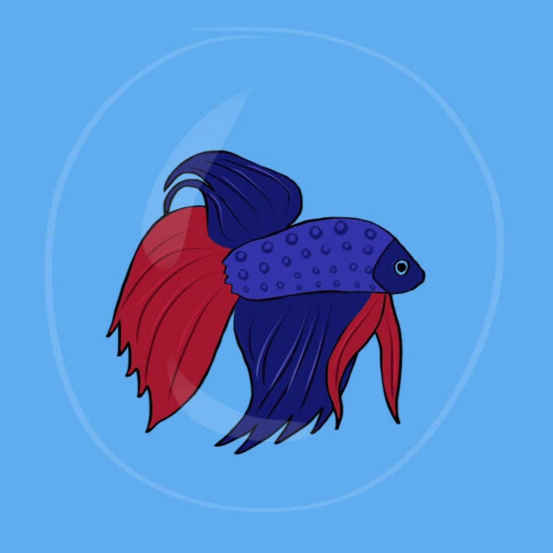 I Would Die 4 My Betta Fish  by Corinne Rabbin-Birnbaum