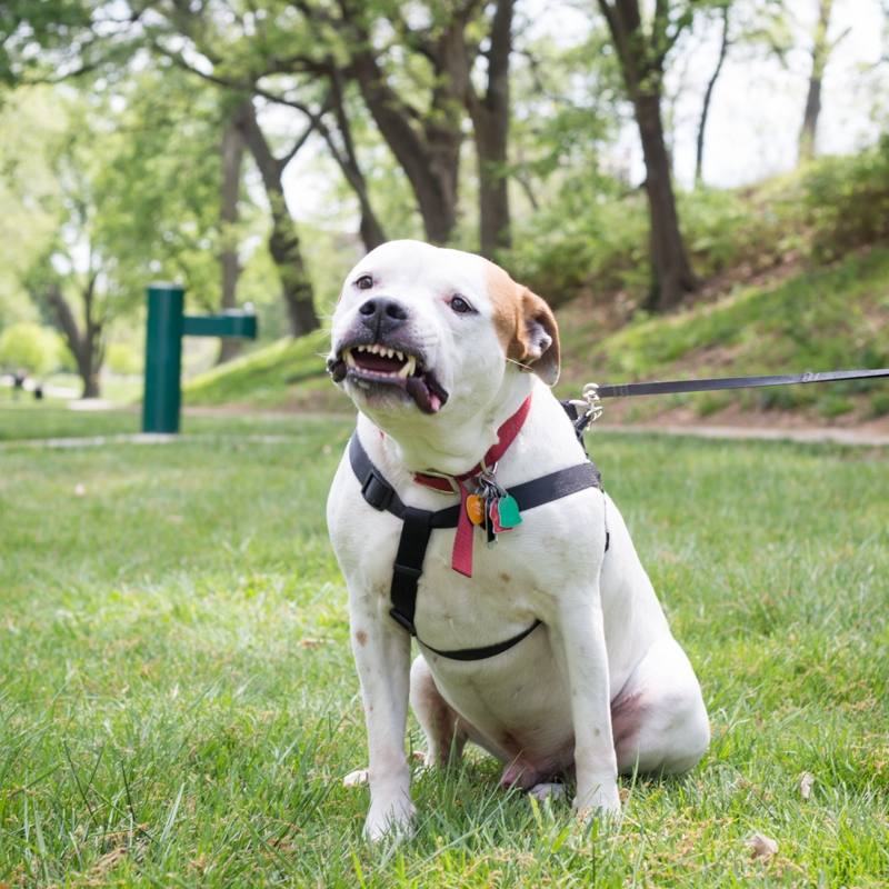 Dogg4Max-3.jpg