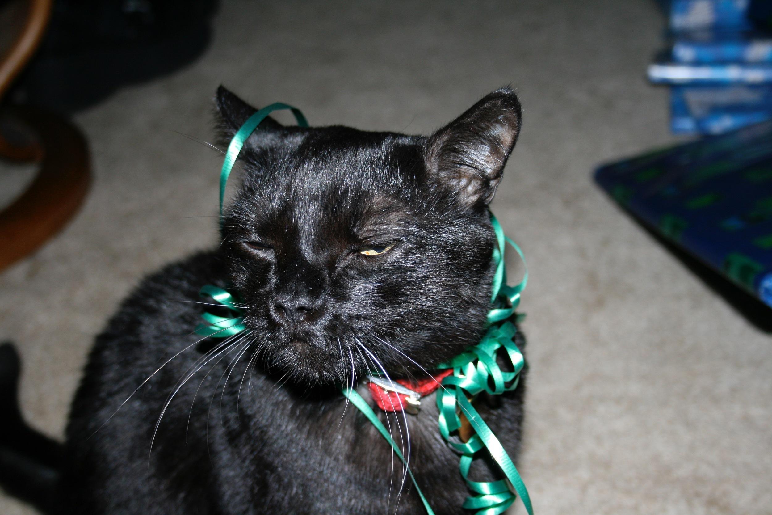 Merry Xmas, Boo.