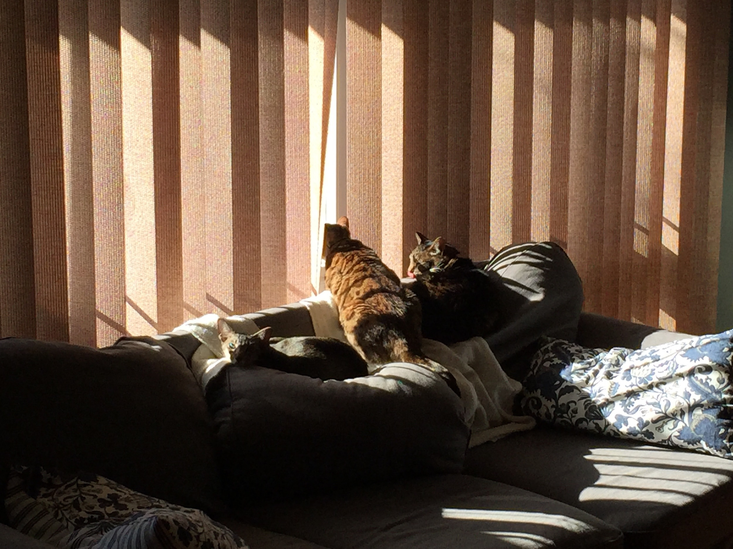 Saucer, Pixel and Sargent taking in the Oregon sun.