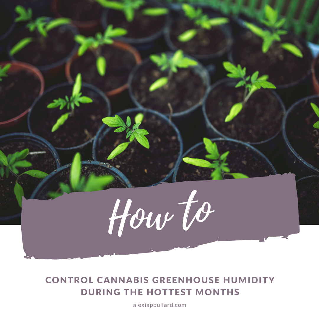 Learn how to control cannabis greenhouse humidity during the hot summer months.  Booklexia Content Marketing  San Diego Cannabis Marketing, California cannabis marketing