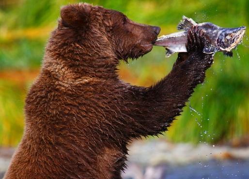 bearflute-1.jpg