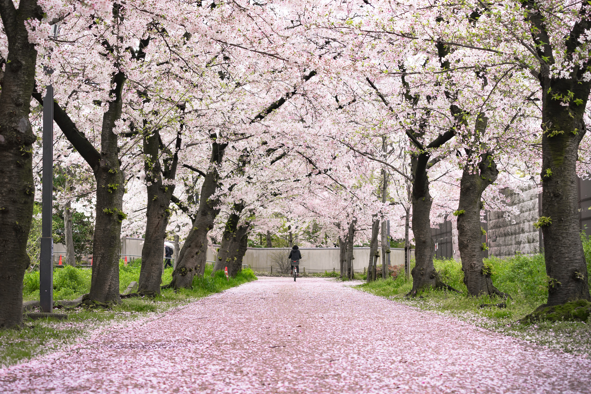 Top 7 Things to Do in Japan