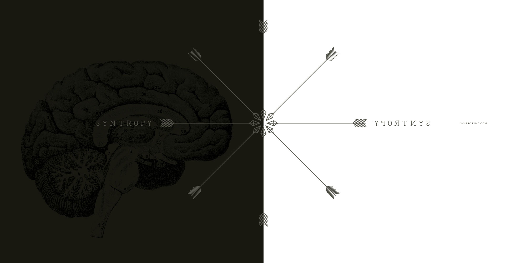Syntropy Identity and Branding