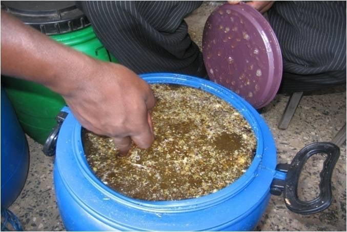beekeeping 3.jpg