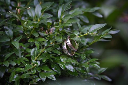 wedding rings in tree