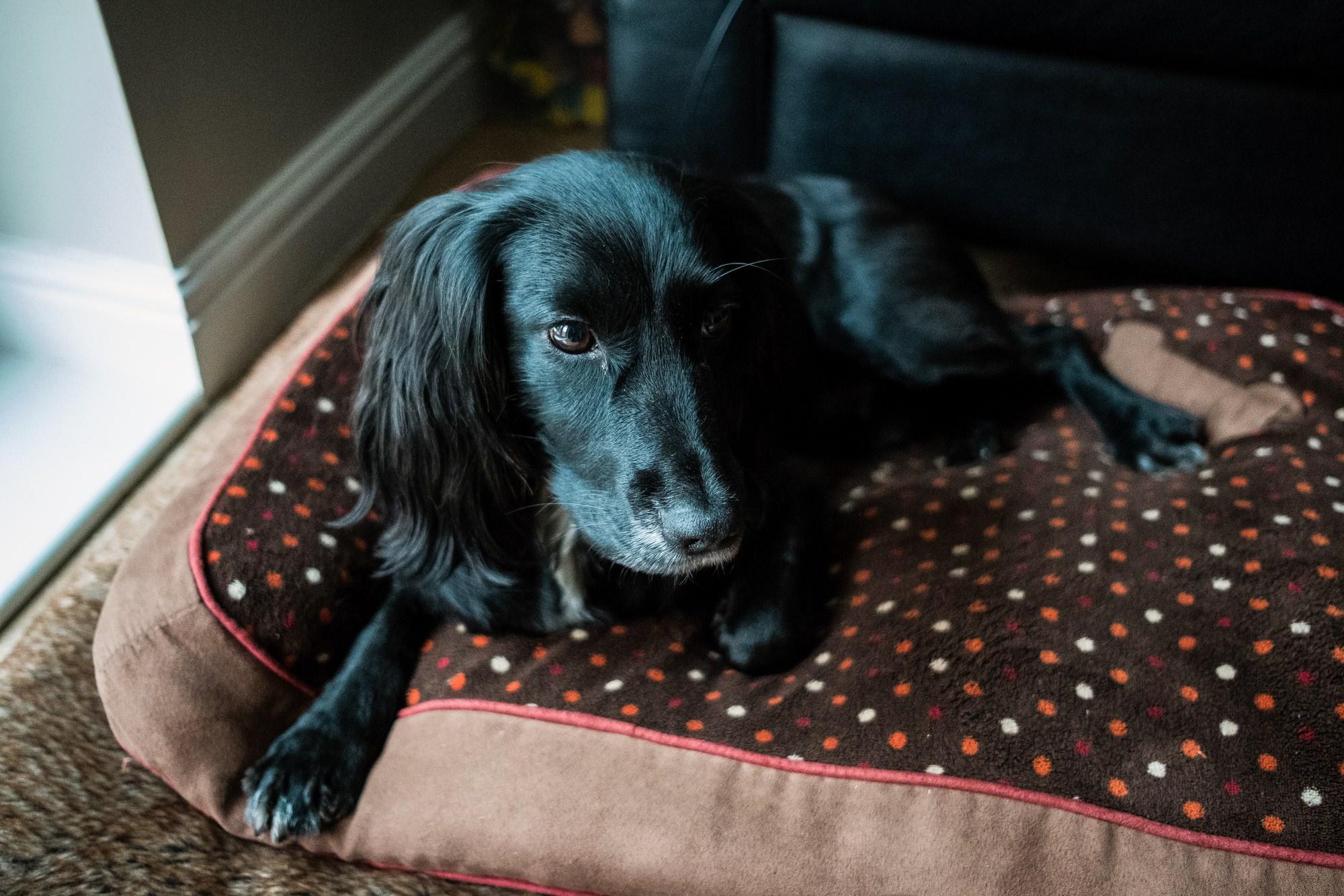 dog sat on mat