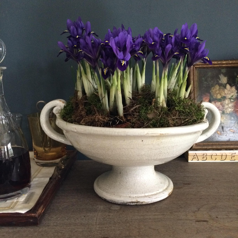 Iris at Home
