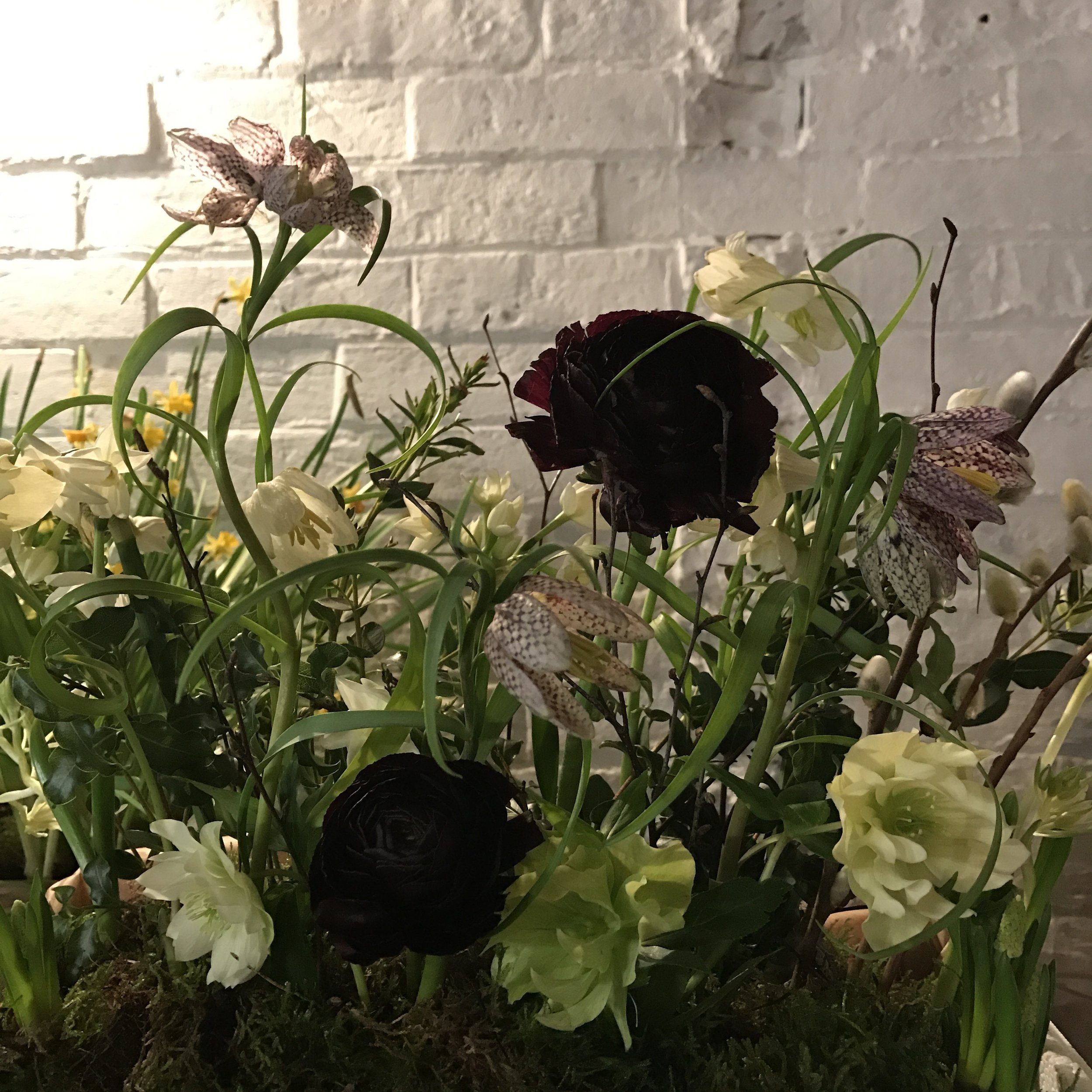 Frittilaries, ranunculus, hellebores, paperwhite narcissi