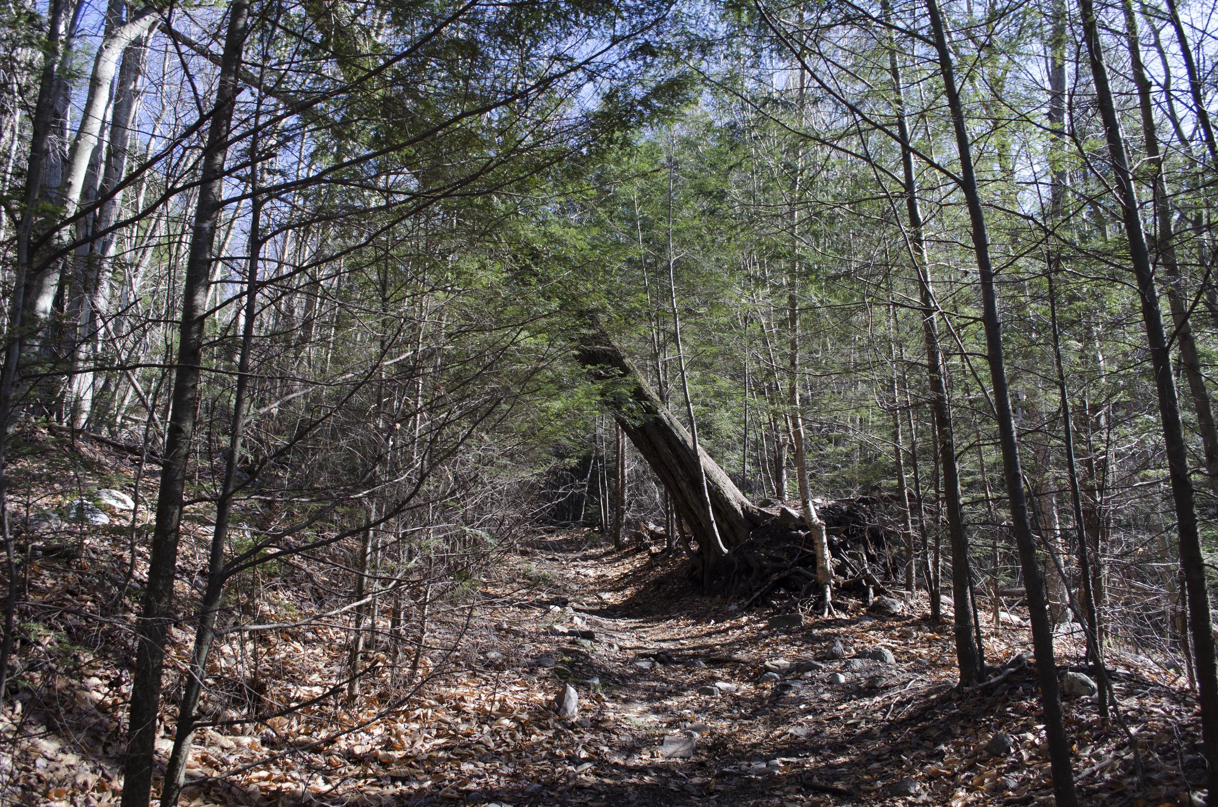 leaningtree.jpg