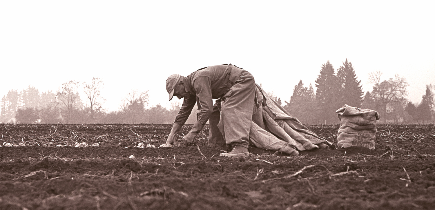 POTATO PICKER, 1958