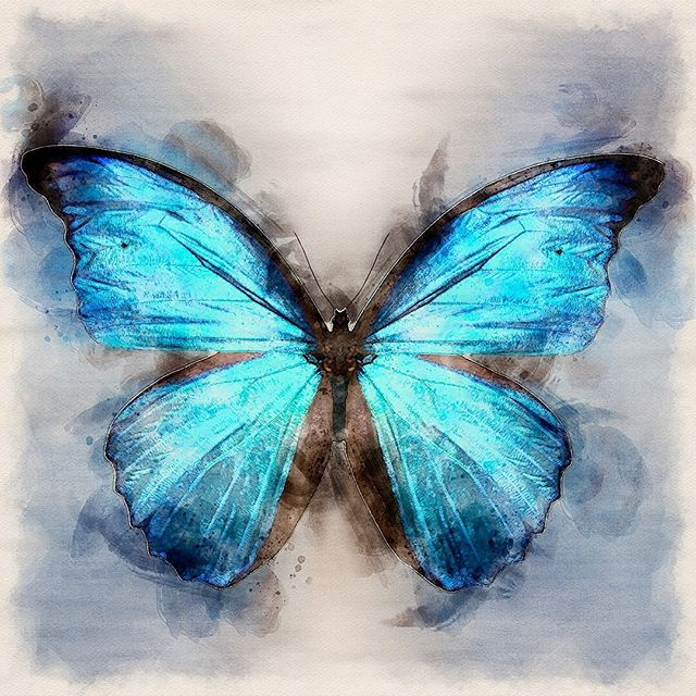 Some beauty for you to brighten up this stormy afternoon. ⛈ 🦋  Blue butterfly by Christina Stefani #salemor #onlineartgallery #stefanifineart #butterflyart #artcollector #artprints #homedecor #oregonart #willamettevalley #interiordesigninspo