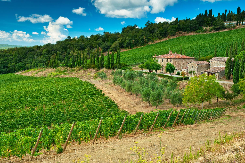 Tuscan-Vineyard-sm.jpg