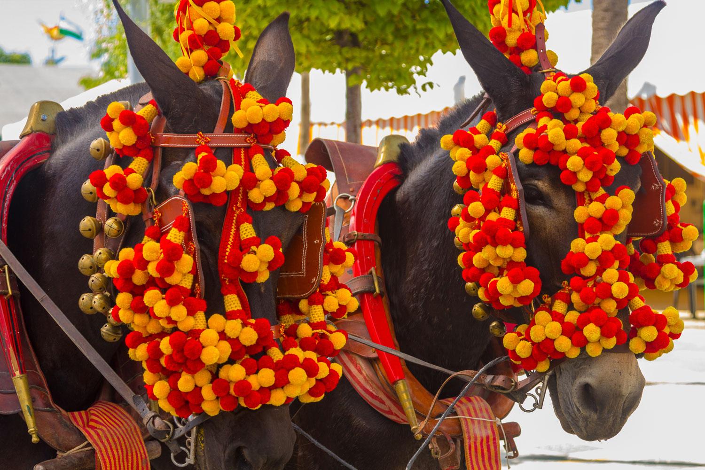 Spain-Parade-Horses-sm.jpg
