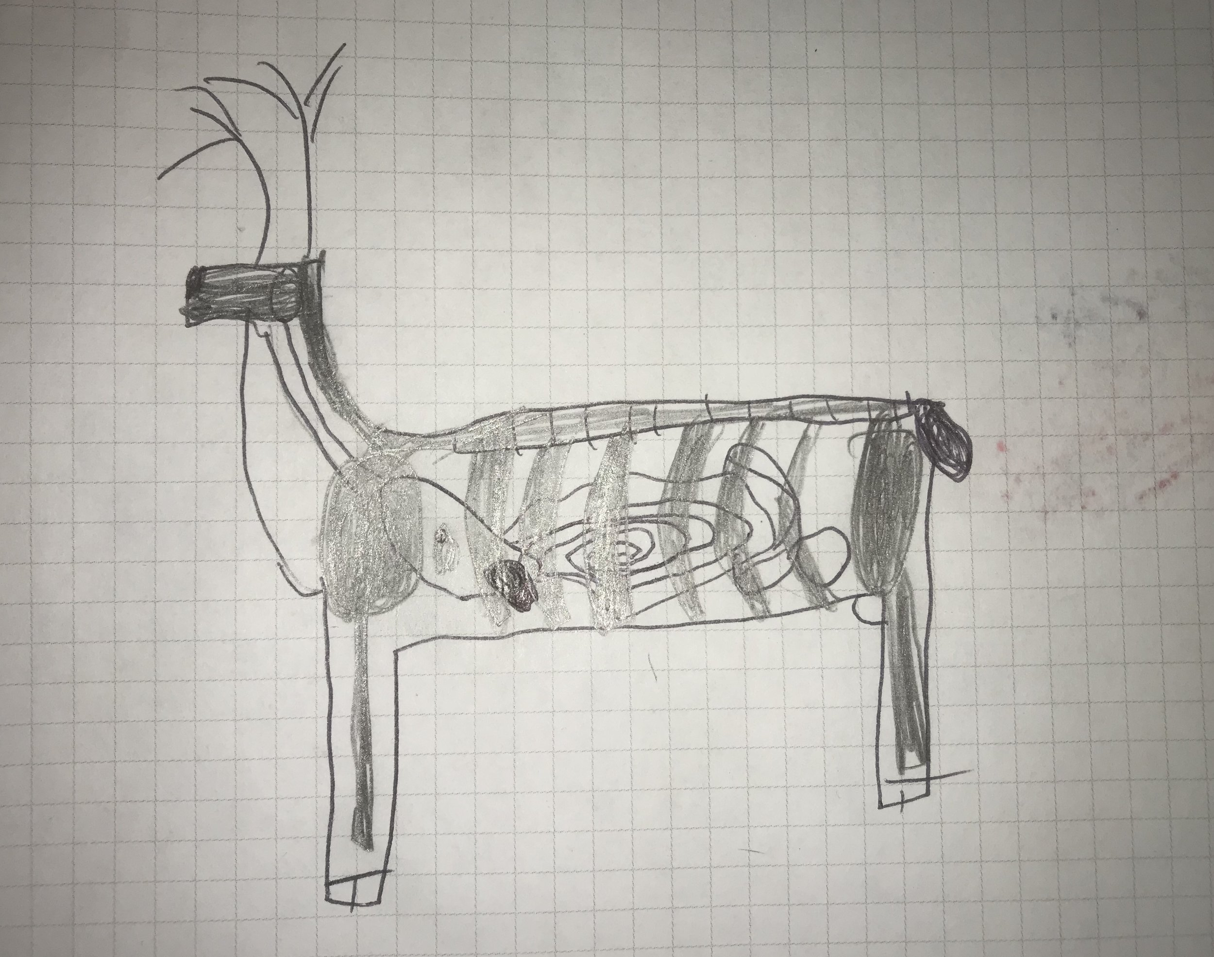 DeerDiagram.jpg