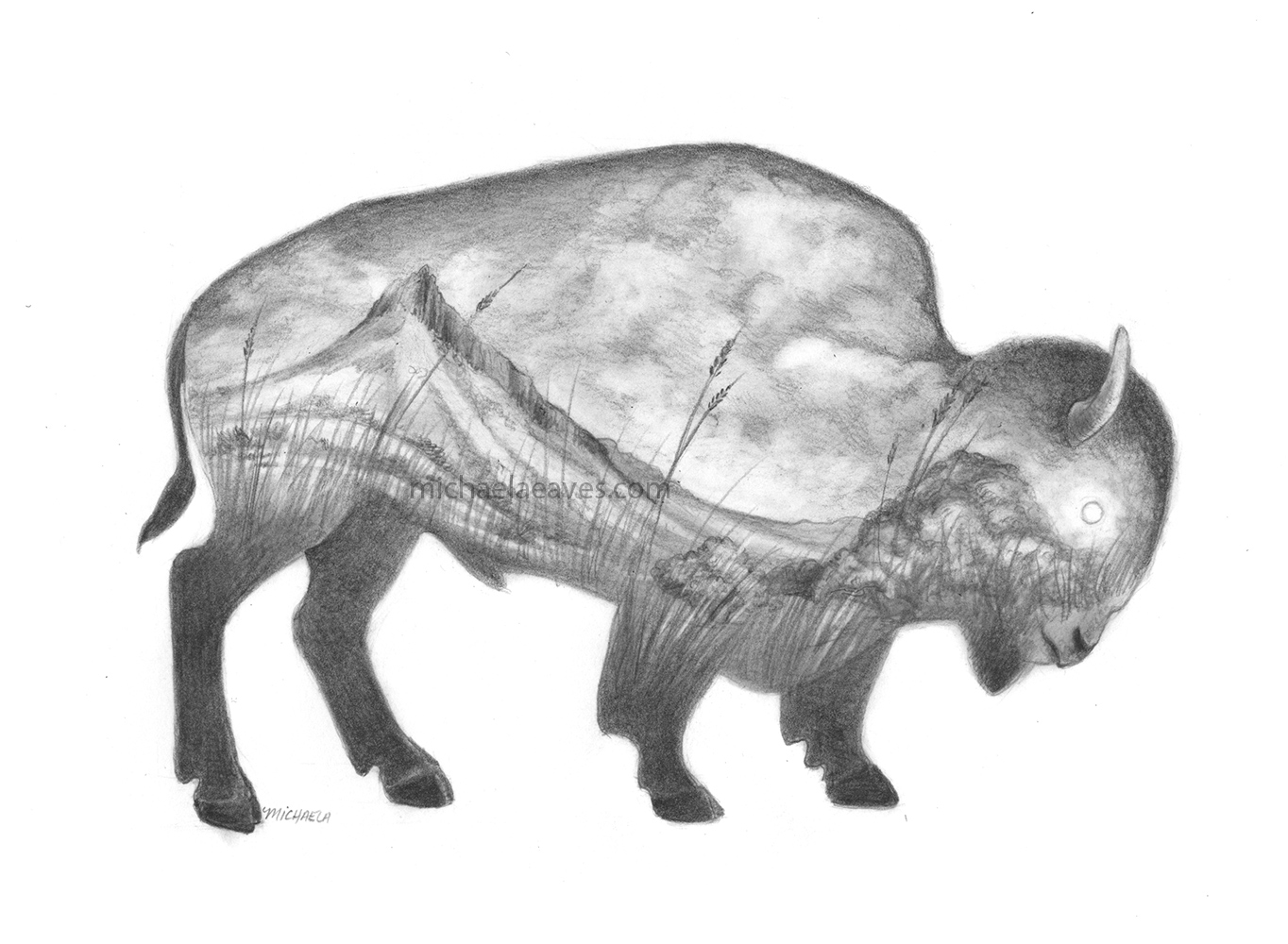 buffaloScenic_72.jpg